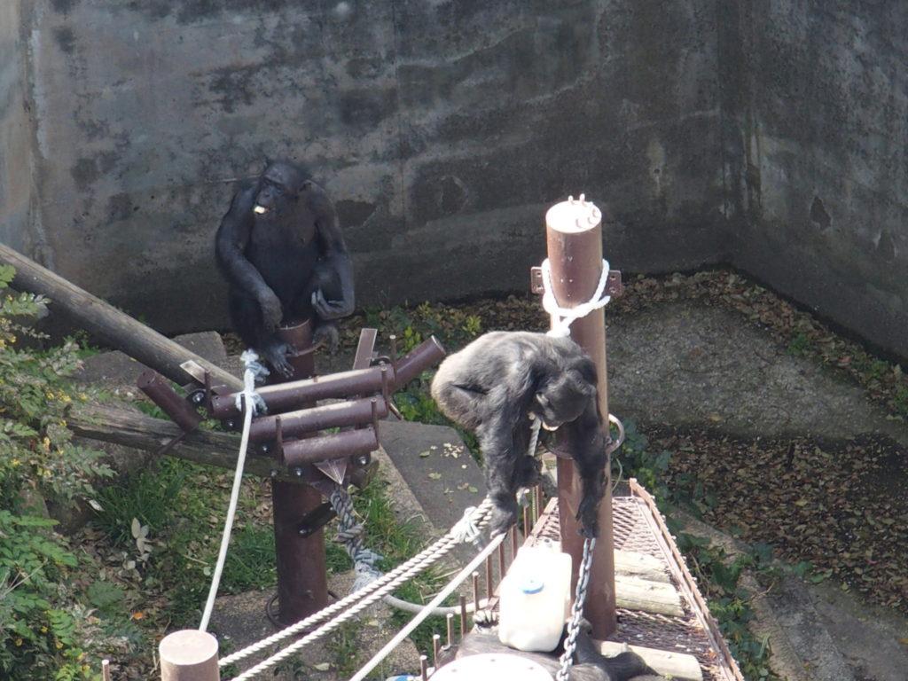 <東山動植物園の観覧車・写真>